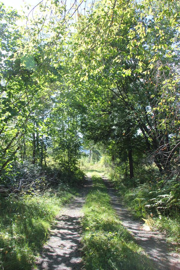 veien_ned_til_lavvo_camping